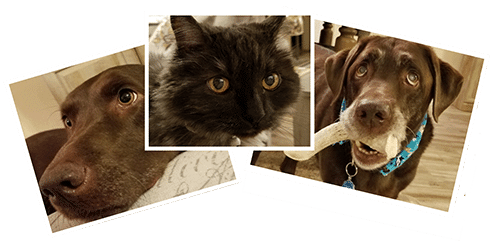 Pet Sitting Glendale AZ