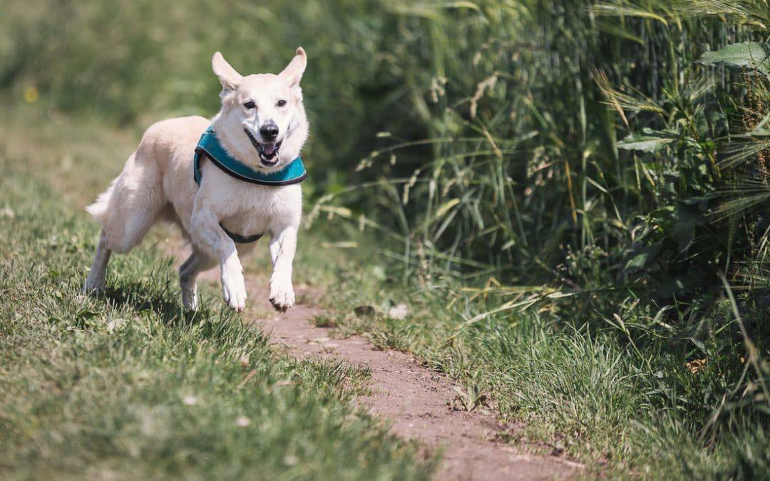5 Best Apps for Dog Owners