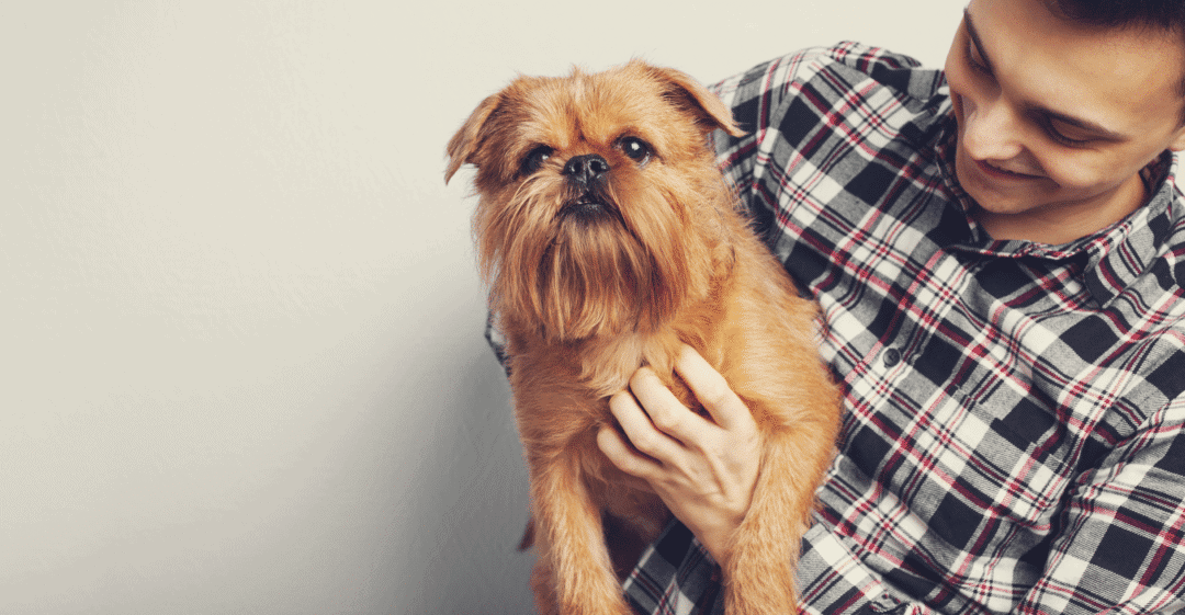 Pet Owners Need to Have A Team of In Home Pet Sitters & Dog Walkers