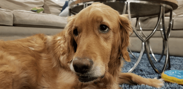 Fur Heart Pet Sitting and Dog Walking - Peoria, Glendale