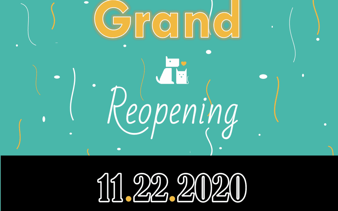 COVID-19 Update: Grand Re-Opening